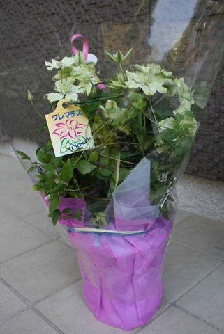 母の日とHappy Birthday_c0248269_95242.jpg
