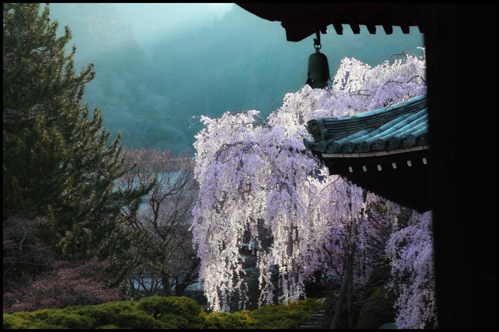 桜 2012 京都 <善峯寺>_f0021869_0183228.jpg
