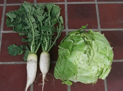 ミカンの皮で野菜の病気予防 _f0018078_19355288.jpg