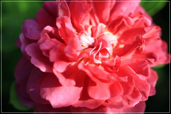 また又咲き出した~♪_b0151893_20102650.jpg