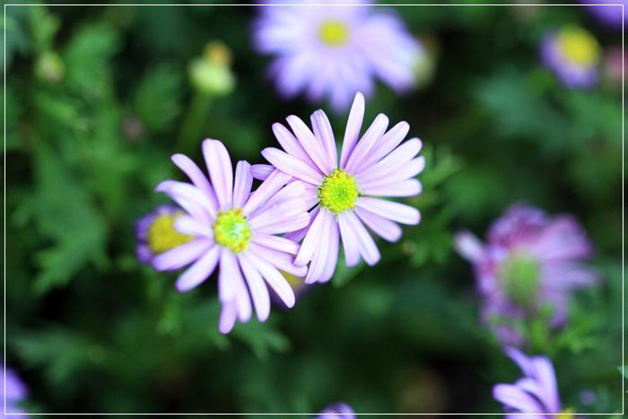 また又咲き出した~♪_b0151893_201072.jpg