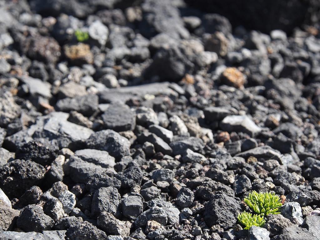 5月13日、風不死岳・樽前山西山-第3報-_f0138096_18263512.jpg