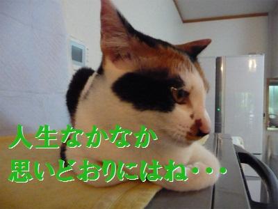 e0072606_1420459.jpg