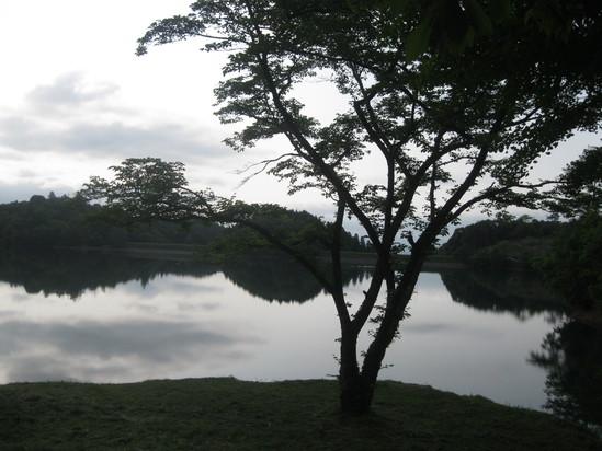 真緑な森で☆_a0125419_10554929.jpg