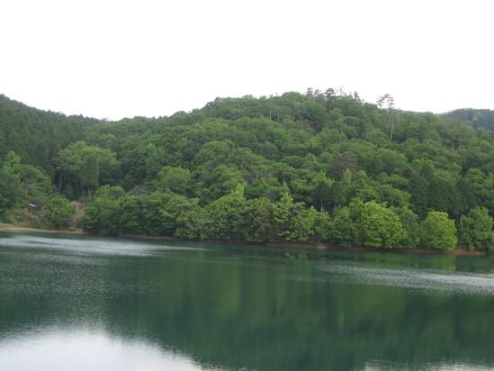 真緑な森で☆_a0125419_10575039.jpg