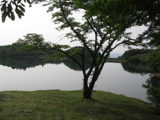 緑な水☆_a0125419_11204725.jpg