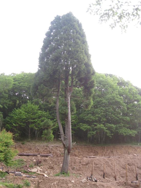 緑な水☆_a0125419_11215088.jpg