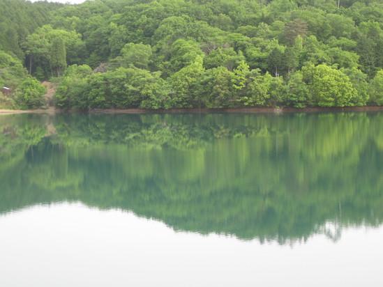 緑な水☆_a0125419_11234653.jpg