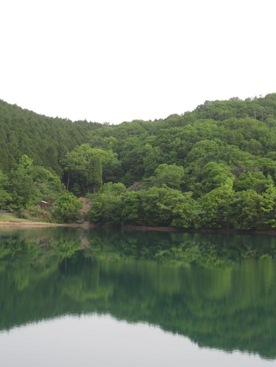 緑な水☆_a0125419_11243215.jpg