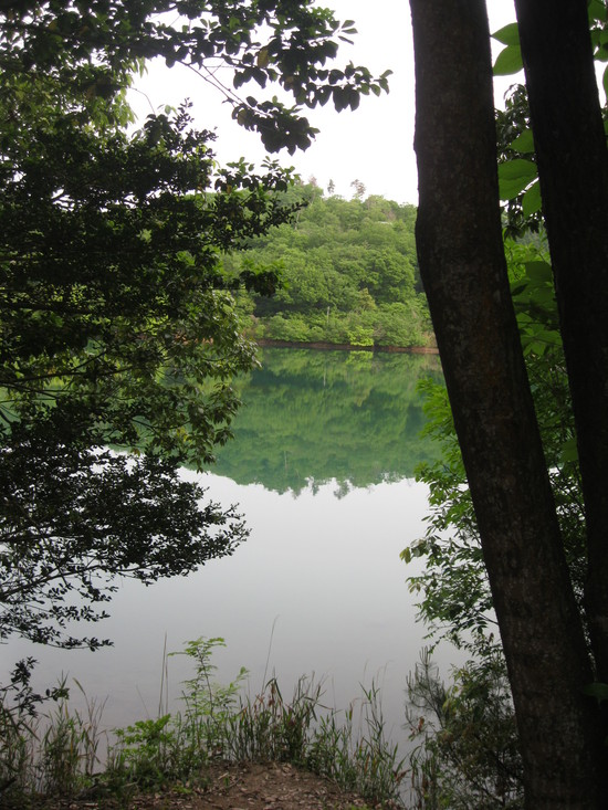 緑な水☆_a0125419_11251632.jpg