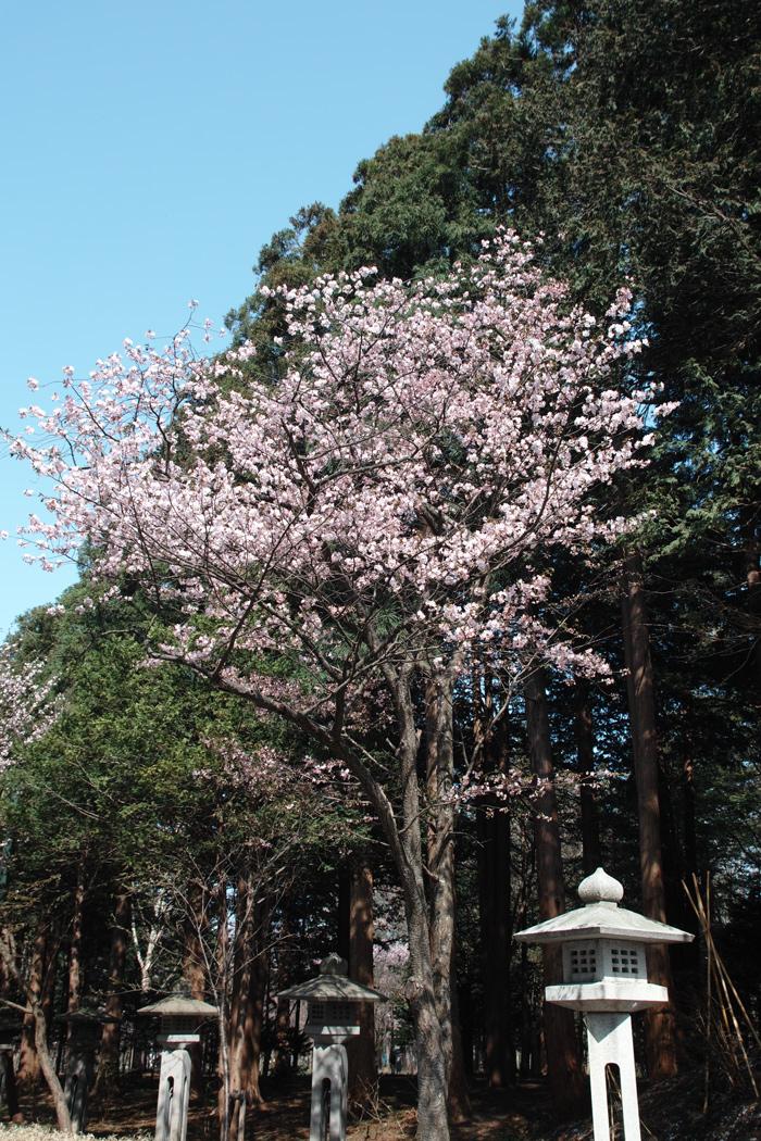 北海道の守り神 ~北海道神宮~_c0223825_7574328.jpg