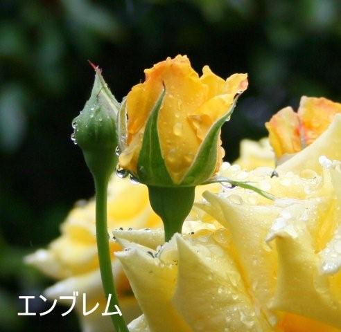 b0197433_14221324.jpg