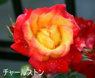 b0197433_14225150.jpg