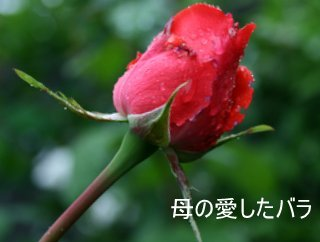 b0197433_14245381.jpg