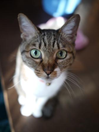 猫のお友だち メイちゃんポポちゃんゴロくん編。_a0143140_22592021.jpg