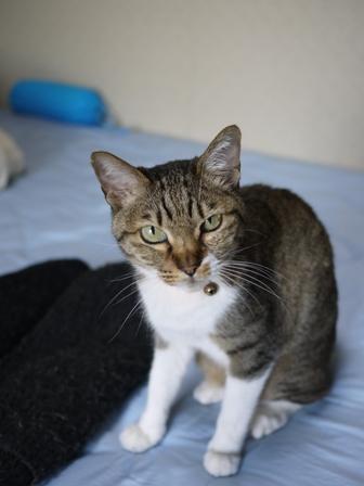猫のお友だち メイちゃんポポちゃんゴロくん編。_a0143140_22594394.jpg