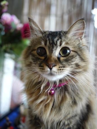 猫のお友だち メイちゃんポポちゃんゴロくん編。_a0143140_2305316.jpg