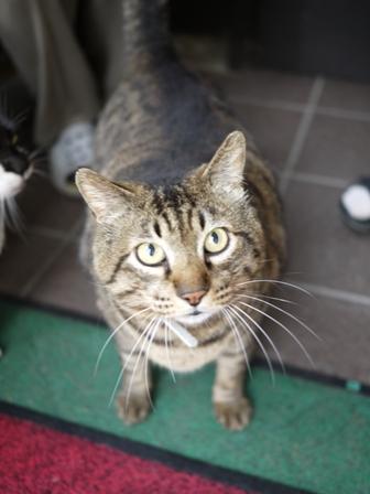 猫のお友だち メイちゃんポポちゃんゴロくん編。_a0143140_2324373.jpg