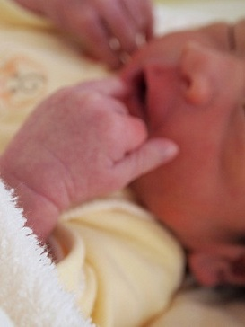 生まれました_e0214646_13154368.jpg
