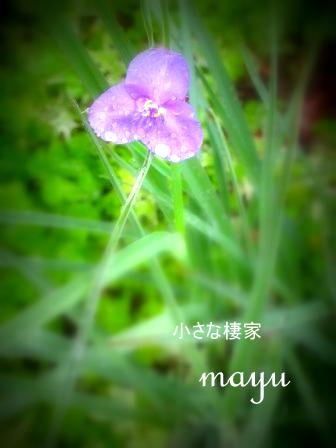 時に・・・無情の雨~_a0243064_1718116.jpg