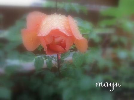 時に・・・無情の雨~_a0243064_17204550.jpg