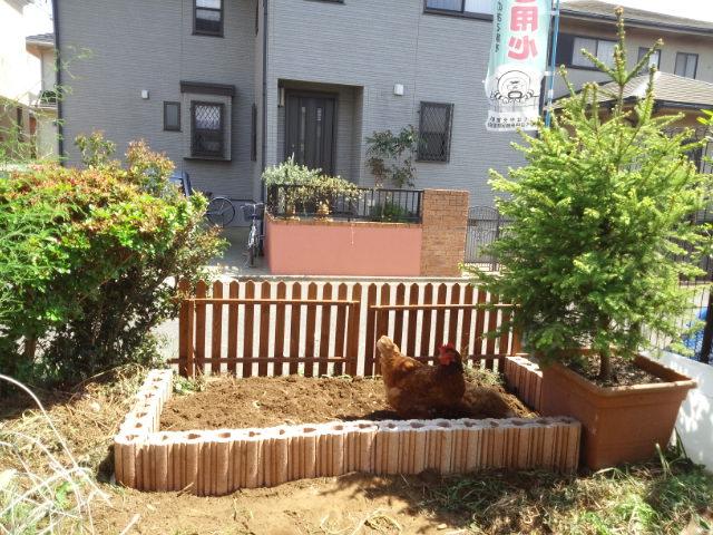 新しく花壇を作りました_c0197684_2225049.jpg