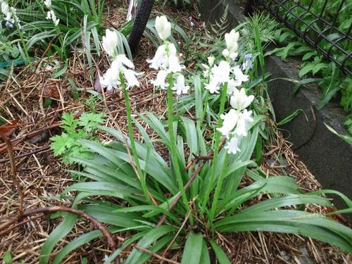 植えてないのに咲いた花たち_c0197684_2316024.jpg