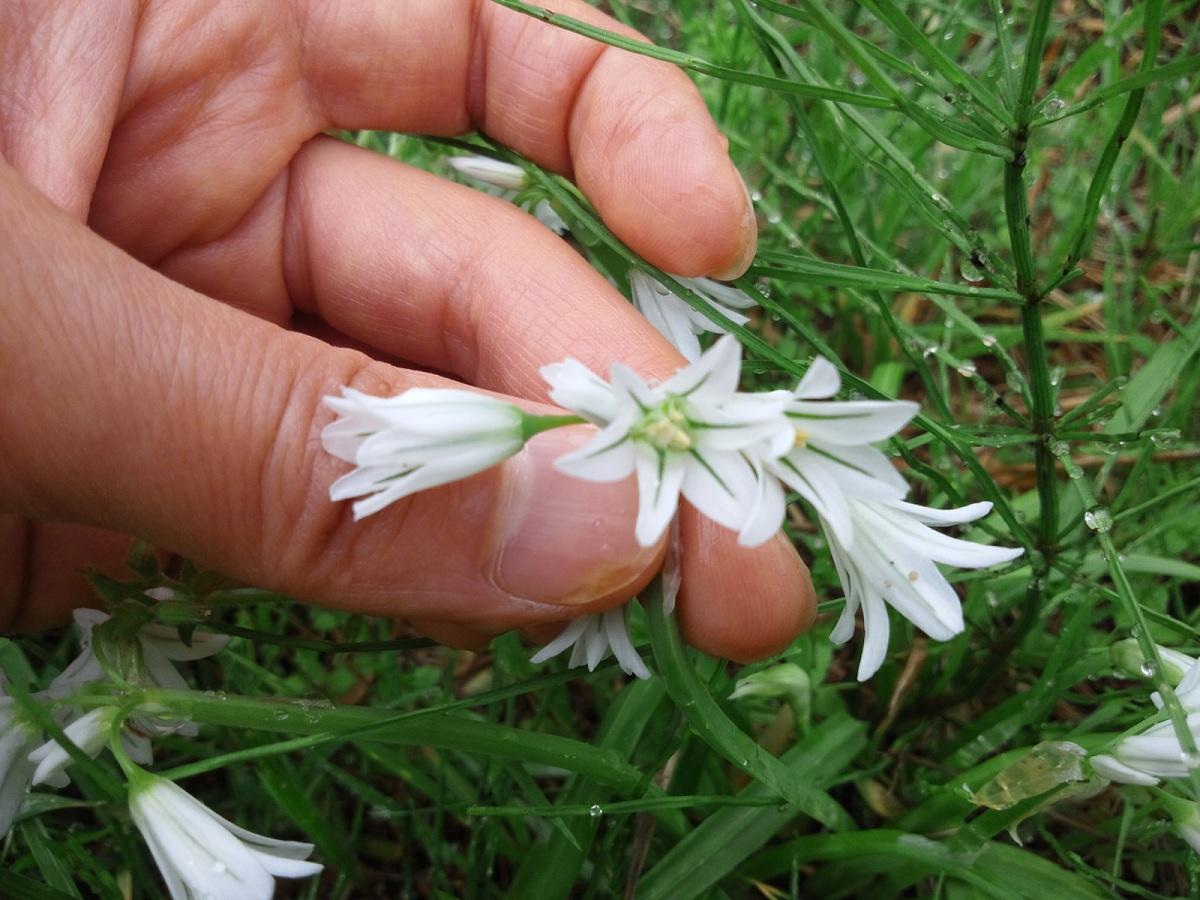 植えてないのに咲いた花たち_c0197684_23163565.jpg