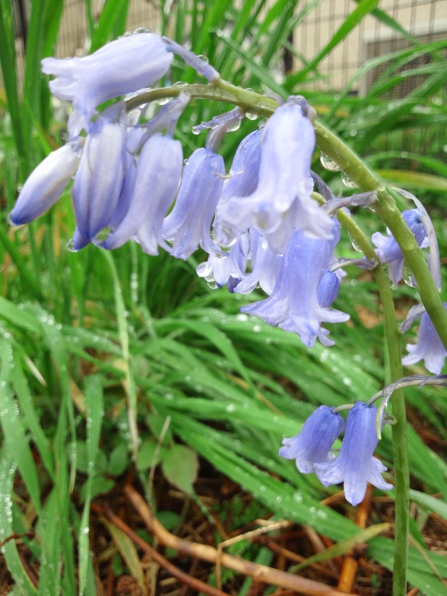 植えてないのに咲いた花たち_c0197684_23165025.jpg