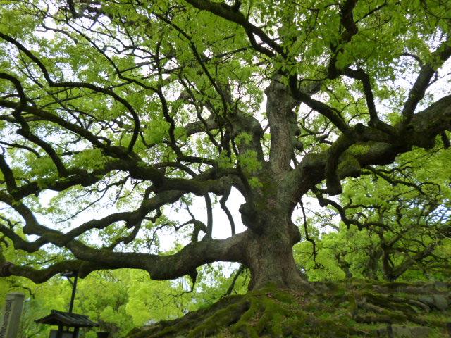 新緑の京都へ・・・・その1_b0210699_21463563.jpg