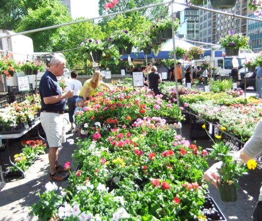カラフルなお花いっぱいニューヨークの青空市場_b0007805_1157876.jpg