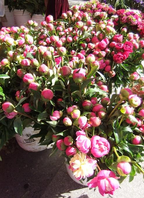 カラフルなお花いっぱいニューヨークの青空市場_b0007805_11593380.jpg