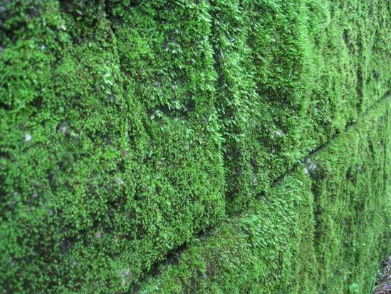 「神と緑な壁」☆_a0125419_10305171.jpg