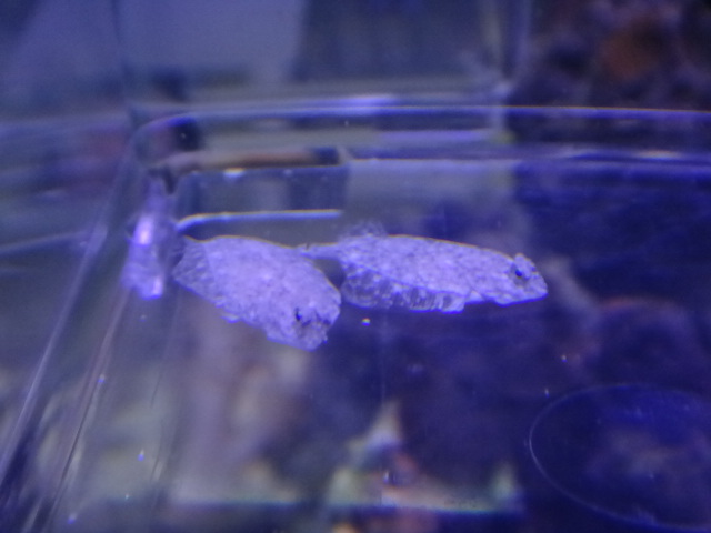 120516 海水魚・サンゴ・水草・淡水魚_f0189122_13112250.jpg