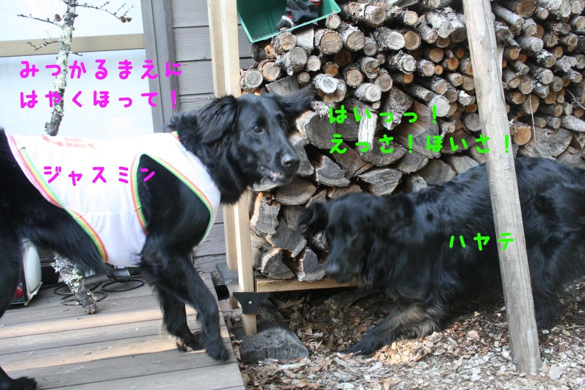 c0237824_1054495.jpg
