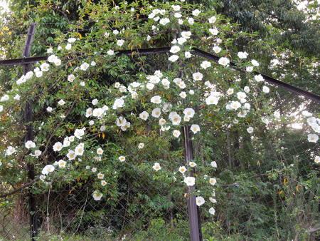 我が家の庭も賑やかになってきましたNO1_d0171630_1903749.jpg