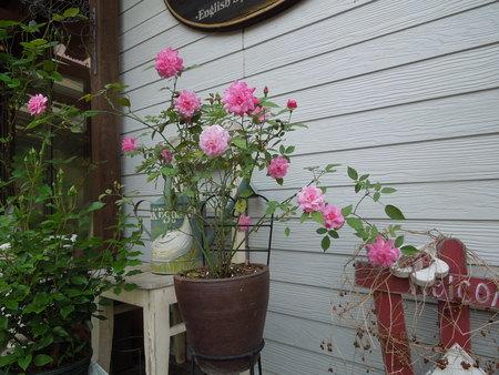 我が家の庭も賑やかになってきましたNO1_d0171630_190935.jpg