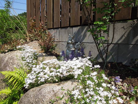 我が家の庭も賑やかになってきましたNO1_d0171630_1983546.jpg