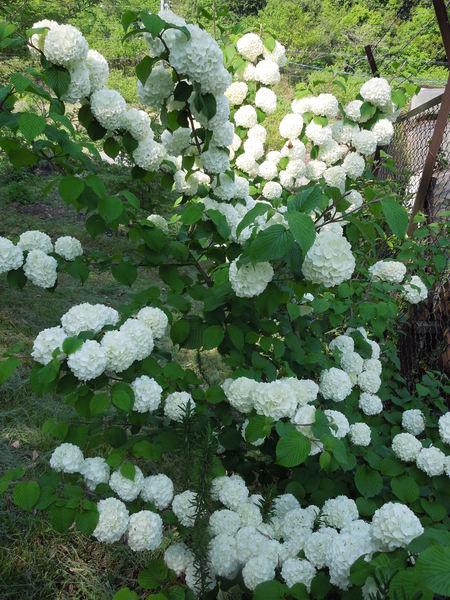 我が家の庭も賑やかになってきましたNO1_d0171630_1994880.jpg