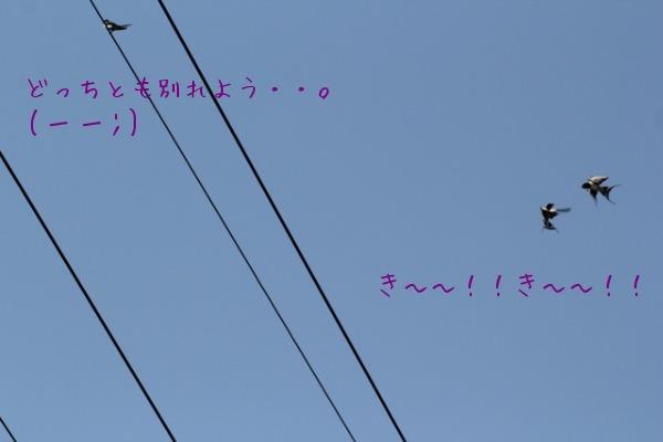 a0226853_16265470.jpg