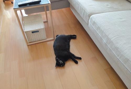 猫の行き倒れ始まりました(^^)/_f0054859_1752338.jpg