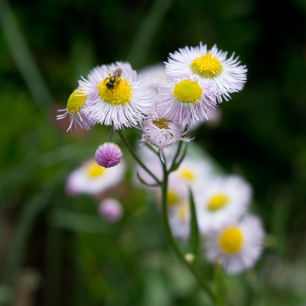 春紫苑_d0123171_1971417.jpg