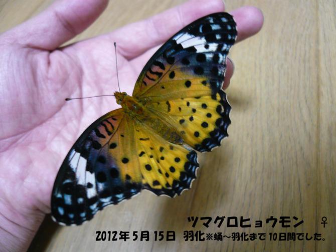 f0183484_19483970.jpg