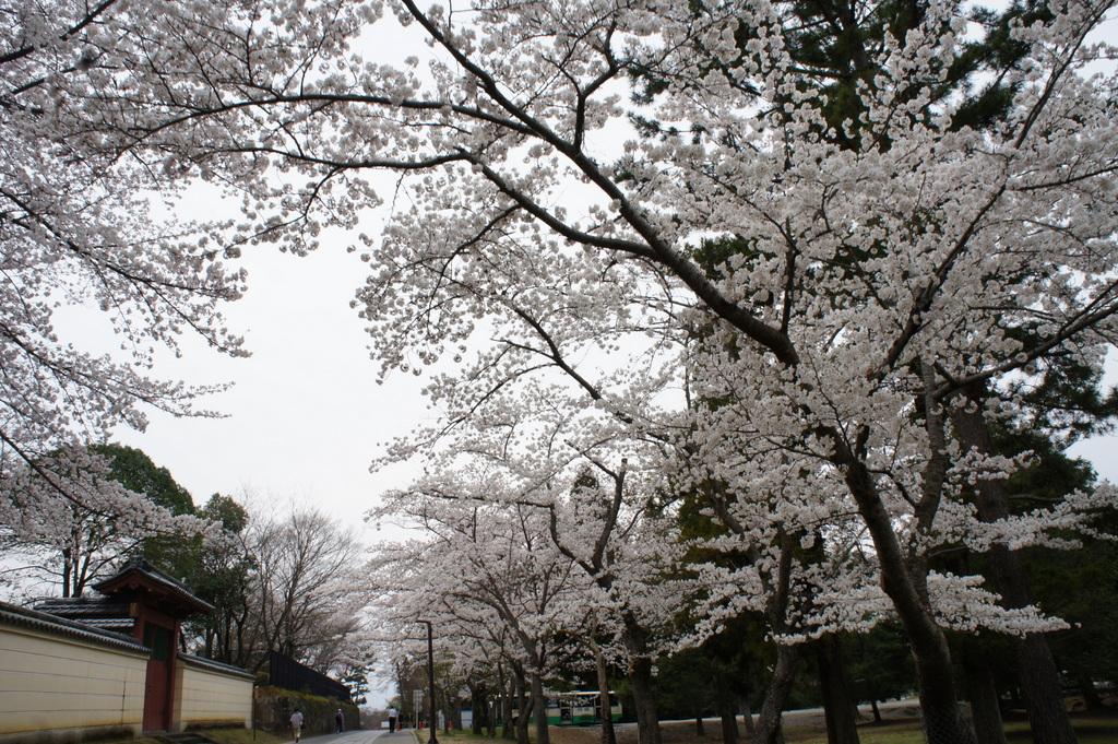 JapanDiary@BerlinVol.3 奈良最終日_c0180686_17551327.jpg