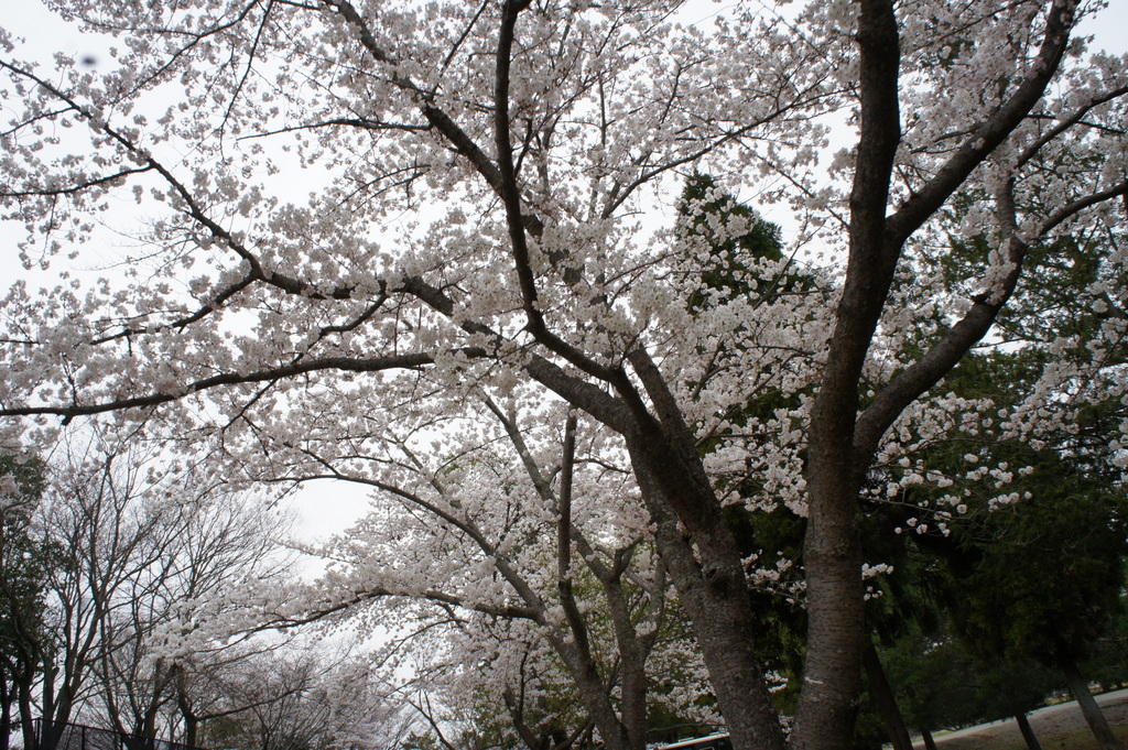 JapanDiary@BerlinVol.3 奈良最終日_c0180686_1755163.jpg