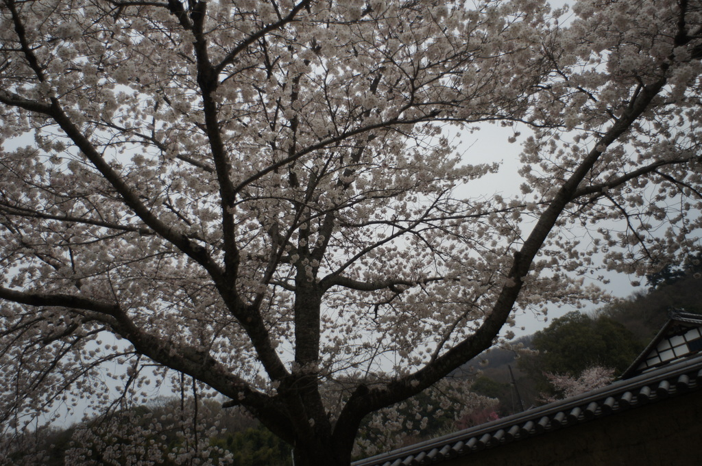 JapanDiary@BerlinVol.3 奈良最終日_c0180686_175522100.jpg