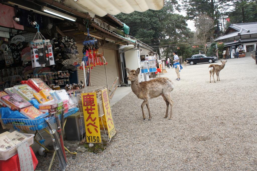 JapanDiary@BerlinVol.3 奈良最終日_c0180686_17575587.jpg