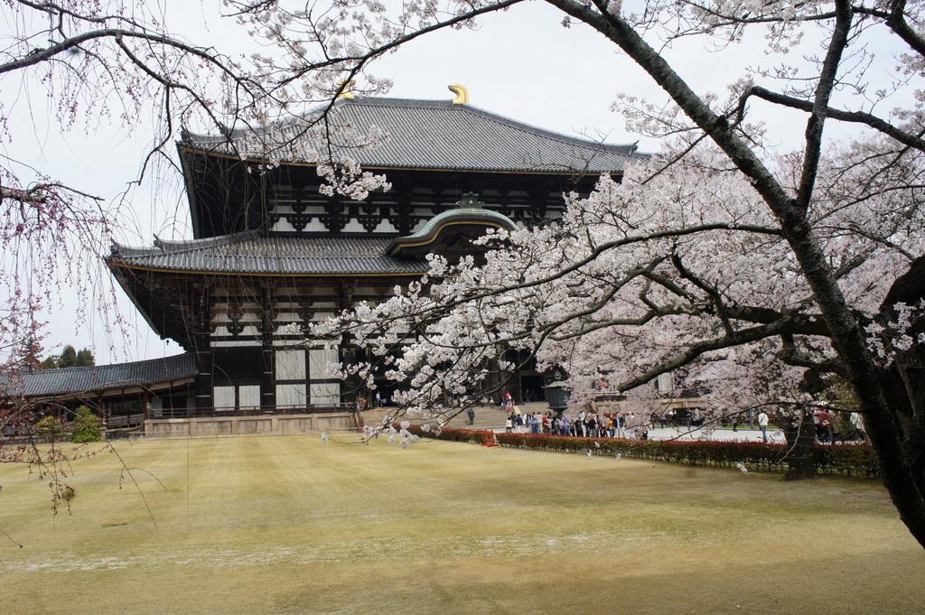 JapanDiary@BerlinVol.3 奈良最終日_c0180686_18145618.jpg
