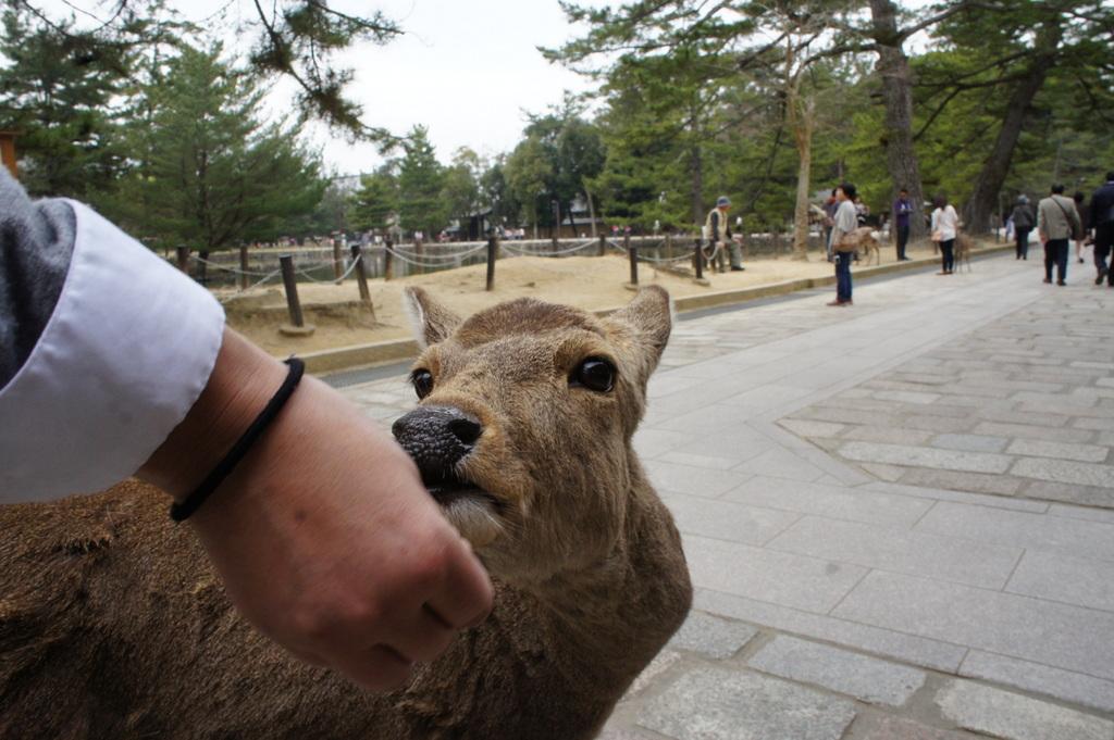 JapanDiary@BerlinVol.3 奈良最終日_c0180686_18231252.jpg