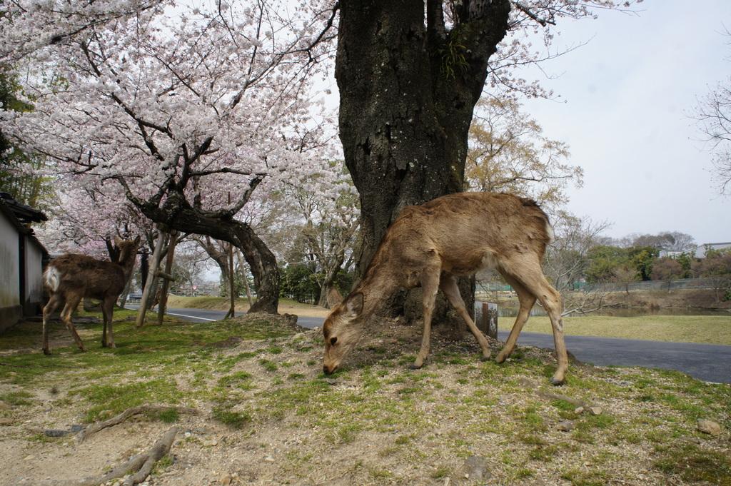 JapanDiary@BerlinVol.3 奈良最終日_c0180686_1894756.jpg
